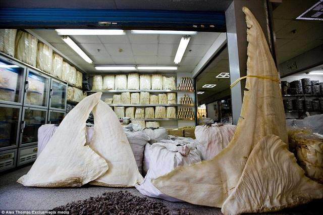 Vi cá mập bày bán ở khu chợ Haizu. Một vây cá mập trắng lớn có thể lên tới 1000 USD.