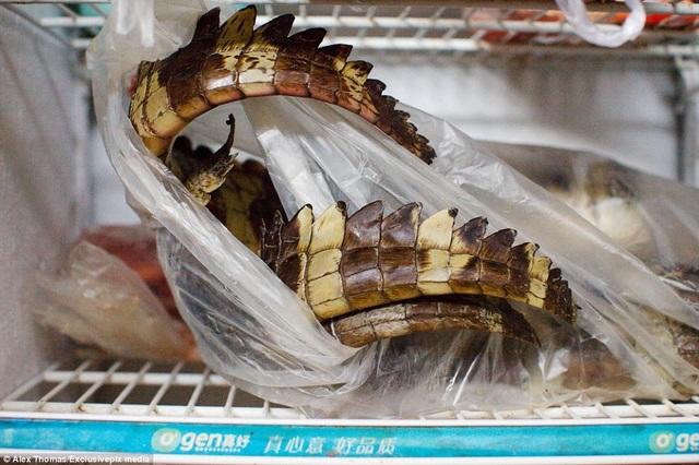 Đuôi của hàng chục con cá sấu tại một nhà hàng ở Huangsha.