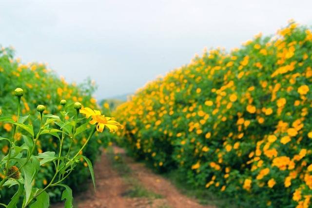 """Những loài hoa """"gọi"""" mùa thu về - 5"""