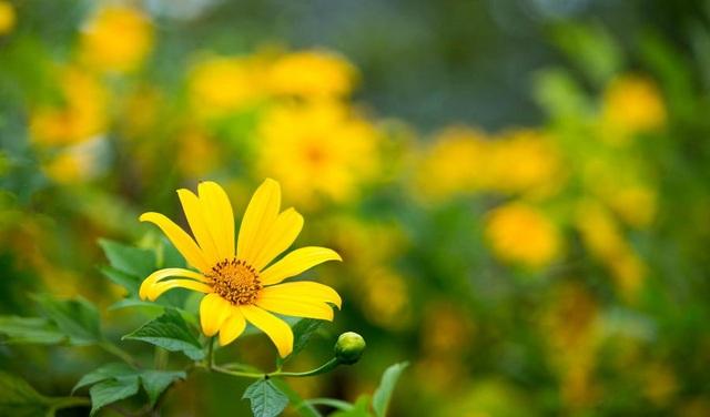 """Những loài hoa """"gọi"""" mùa thu về - 6"""