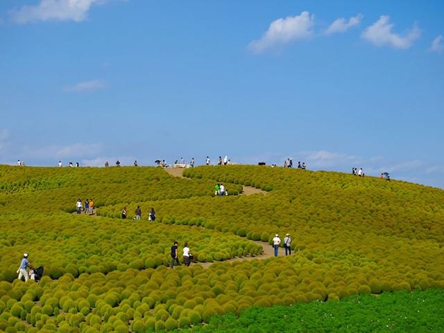 Công viên Hitachi hay công viên ven biển Hitachi là một công viên công cộng ở Hitachinaka, Ibaraki, Nhật Bản. Nó có diện tích khoảng 190 ha, với tính năng của công viên hoa nở quanh năm