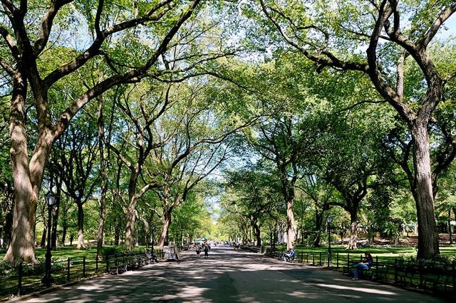 Hàng cây mướt xanh trong tuyến phố đi bộ Poet ở Công viên Trung tâm, thành phố New York, Mỹ