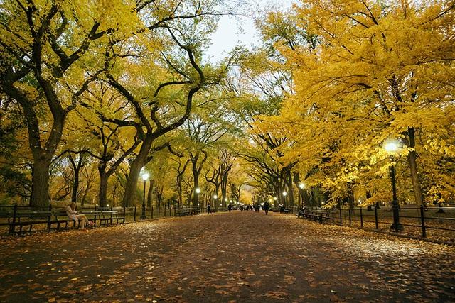 Vẫn là hàng cây ấy nhưng đã chuyển màu lá khi thu về