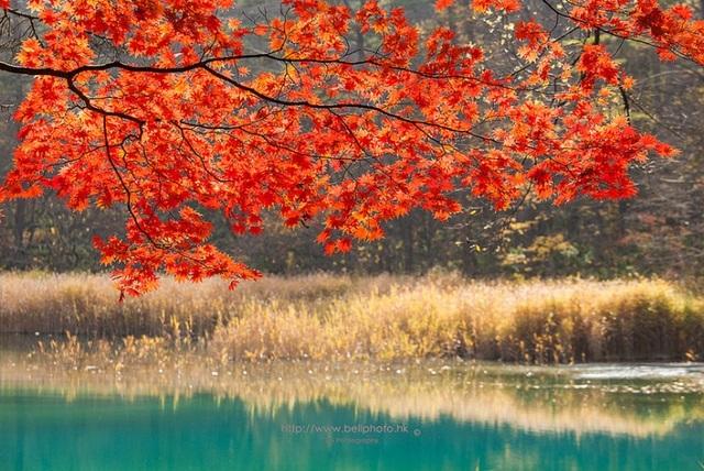 Tour trọn gói tham khảo của Vietravel Hà Nội, bay hàng không Vietnam Airlines:Ngắm lá đỏ, Hái trái cây theo mùa: Ibaraki – Fukushima – Núi Phú Sỹ - Tokyo – Odaiba (5 ngày)Khởi hành: 22/10; 12,26/11; 10,31/12 – Giá từ: 32.9 triệu