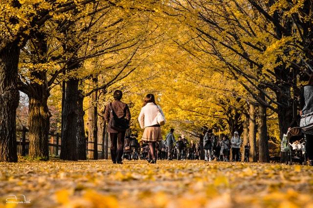 Những con đường lãng mạn nhất thế giới khi trời vào thu - 3
