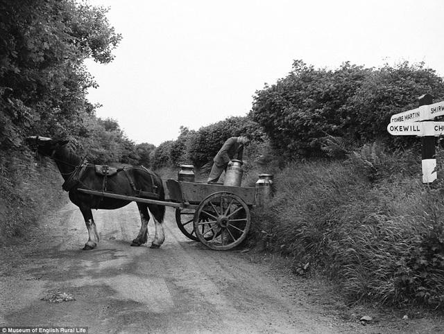 Một người đàn ông đang thu nhận sữa và chất lên chiếc xe ngựa nhỏ của mình.