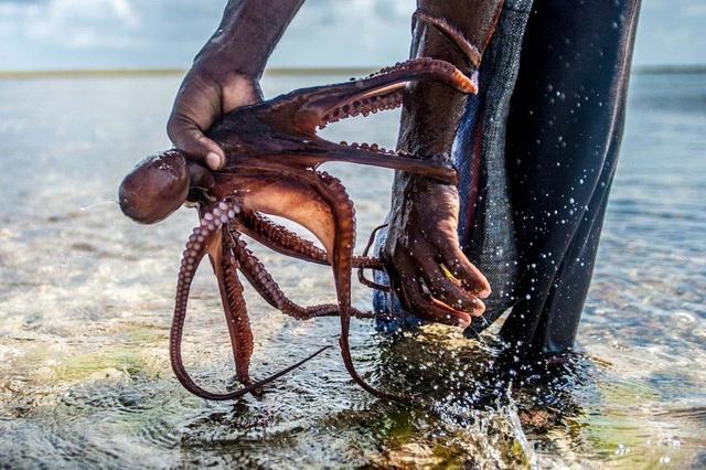 Cuộc sống của những người thợ săn bạch tuộc - 5