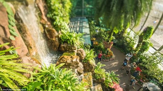 Một trong những điều hành khách khó lòng thấy nhàm chán khi quá cảnh ở Changi chính là khu vườn bướm, thác nước nhân tạo và cả rạp chiếu phim miễn phí 24 giờ