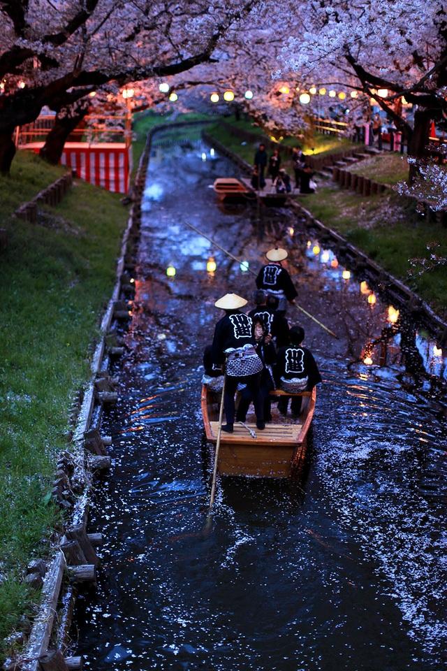 Cảnh lãng mạn như chốn thiên đường nơi nước Nhật. Những cánh hoa anh đào rơi xuống dòng kênh như suối hoa.