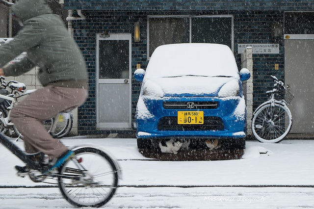 Những chú mèo tránh tuyết dưới gầm xe ô tô trong ngày đông giá lạnh.