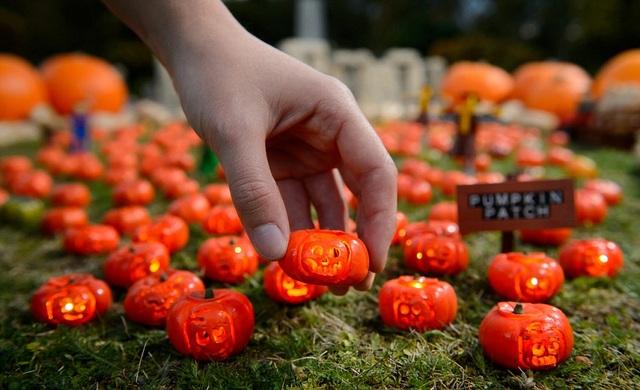 Nghệ sỹ người Anh tốn hơn 60 giờ đồng hồ để tạo nên 200 trái bí nhỏ xinh