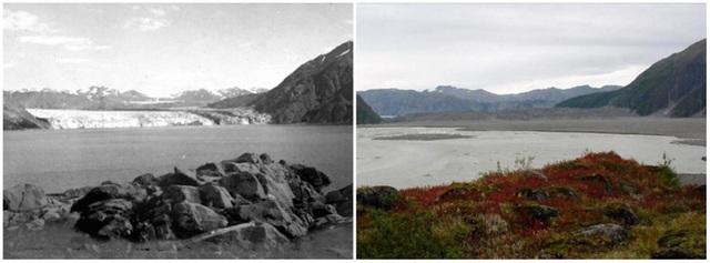 Tương tự như thế là sông băng Carroll ở Alaska, Mỹ. Ảnh chụp vào tháng 8/1906 và tháng 9/2003.