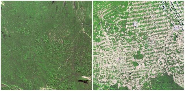 Những cánh rừng ở Rondonia, Brazil. Ảnh chụp tháng 6/1975 và tháng 8/2009. Chỉ sau hơn 30 năm, cánh rừng rậm um tùm trước kia có sự thay đổi không nhỏ.