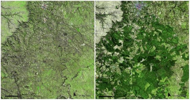 Rừng Uruguay. Ảnh chụp tháng 3/1975 và tháng 2/2009. Chính quyền Uruguay đã phát triển quy hoạch và mở rộng diện tích rừng từ 45.000 ha lên 900.000 ha. Tuy nhiên, điều này tác động không nhỏ và dẫn tới sự mất mát của hệ động thực vật đa dạng.