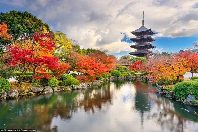 Khung cảnh đẹp như tranh vẽ tại chùa Toji ở Kyoto Nhật Bản với hàng cây lá đỏ xung quanh.