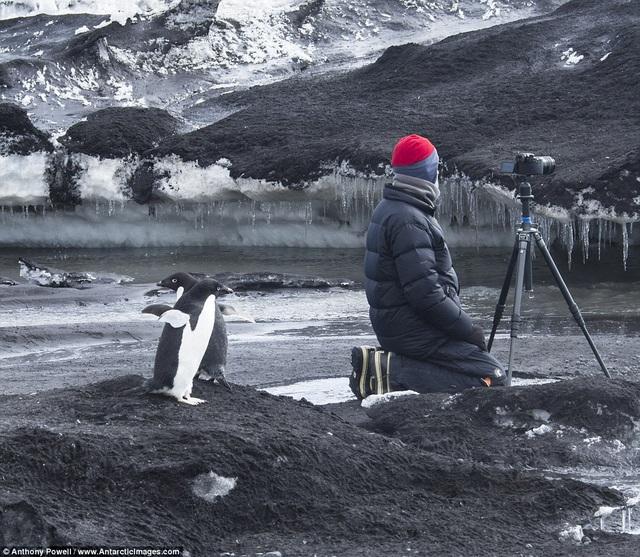 Theo lời kể của nhiếp ảnh gia, những động vật ở Nam Cực rất thân thiện. Chúng hoàn toàn không sợ hãi, thậm chí khá tò mò về con người.