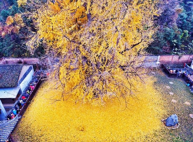 Vẻ đẹp của cây nhìn từ trên cao
