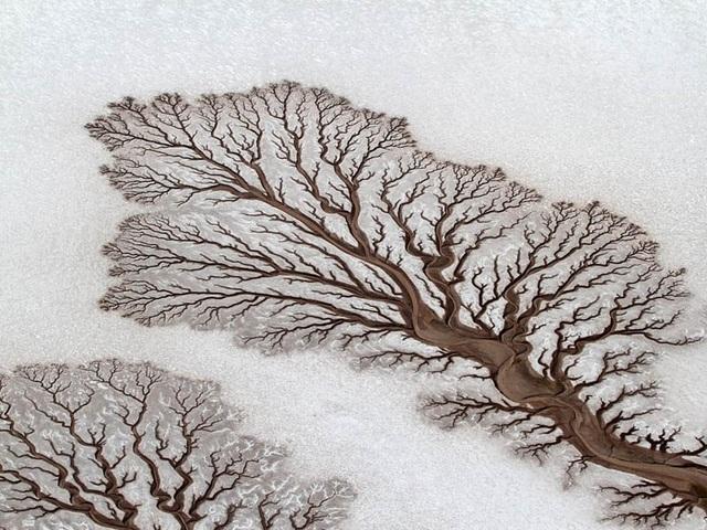Đây có phải cái cây? Thực ra đó là hình dạng giống cây ở sa mạc Baja California (Mexico), hình thành trên cát.