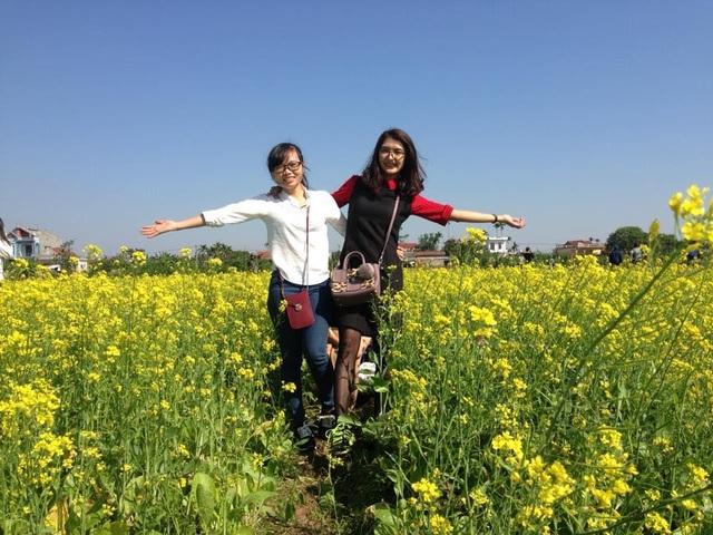 Ngỡ ngàng với cánh đồng hoa cải vàng rực rỡ đẹp bậc nhất Việt Nam - 4