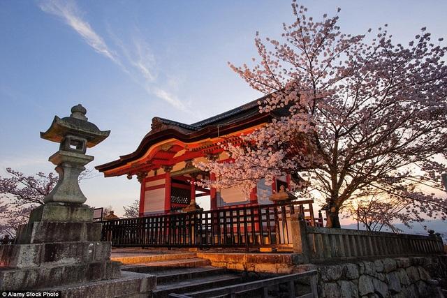 Những cặp đôi yêu nhau đừng quên đến Nhật Bản vào dịp xuân để hòa mình trong tiết trời ấm áp với thảm hoa anh đào bung nở. Trong hình là khung cảnh của lối vào đền Kiyomizu-dera.
