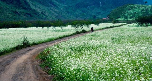 Núi rừng Tây Bắc qua 4 mùa hoa - 6