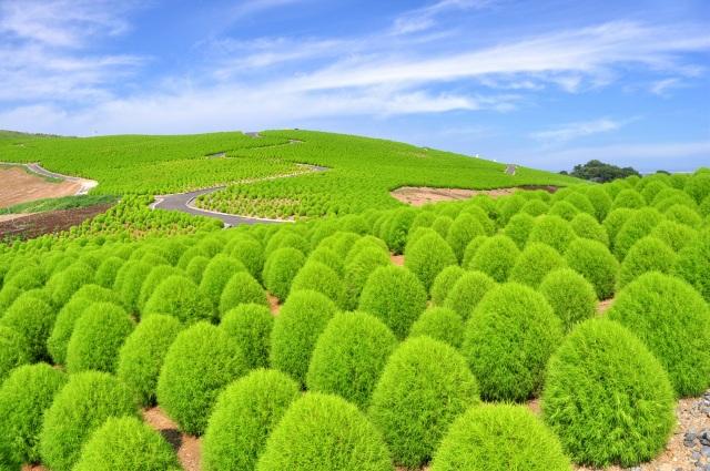 Đến Nhật nhớ khám phá ngọn đồi đẹp như cổ tích này - 3