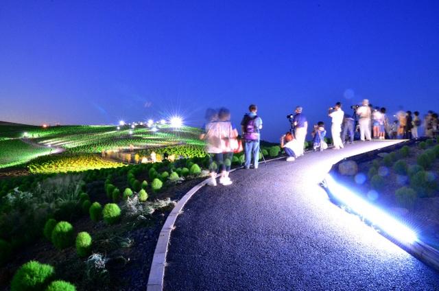 Thắp đèn nhiều màu vào ban đêm mùa hè