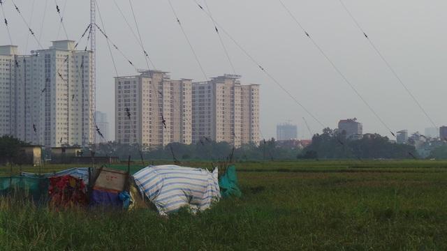 Những chung cư cao tầng đang bị kiến ba khoang tấn công do nằm gần những cánh đồng lúa hay khu vực đất bỏ hoang.