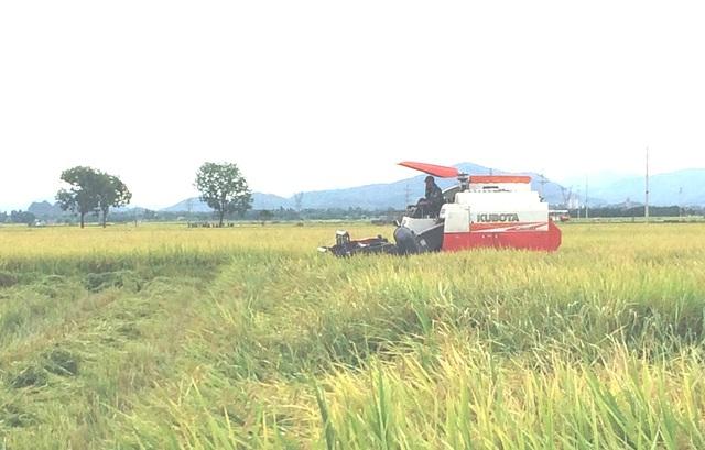 Để được gặt trên cánh đồng, thì mỗi máy gặt phải trả cho xã 2 triệu đồng.