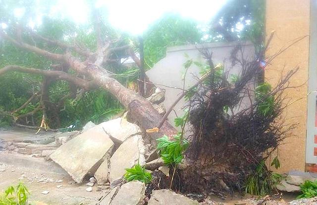 Mưa lớn làm cây đổ ở xã Nghi Vạn, huyện Nghi Lộc.