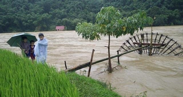 Mặc dù mưa to, gió lớn, lũ lên cao nhưng các em học sinh ở Quế Phong vô tư dạo bên suối nước chảy xiết rất nguy hiểm.