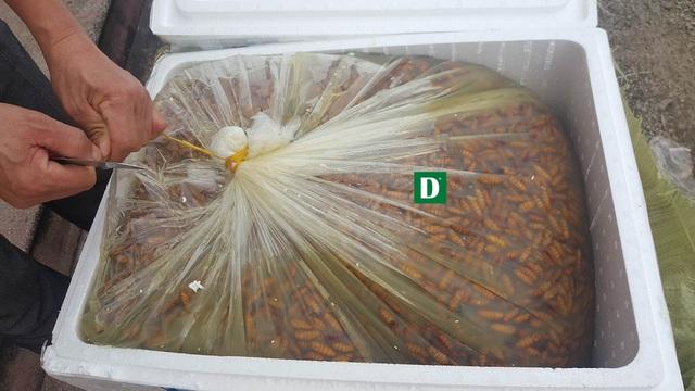 1.100 kg nhộng tằm khi CSGT trạm Diễn Châu phát hiện đã mốc mùi.