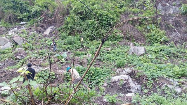 Đoàn kiểm tra Hạt kiểm lâm Quỳ Châu và UBND xã Châu Hạnh tại hiện trường vụ phát rừng.