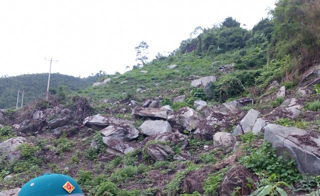 Khoảng 2ha rừng trạng thái 1C bị chặt phá trái phép.