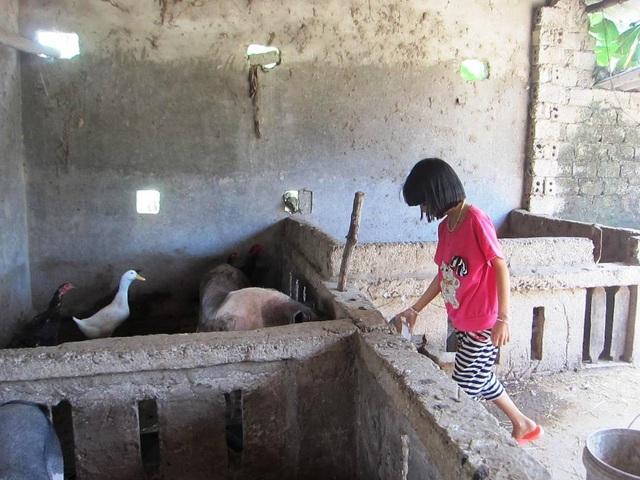 Hằng ngày các em thay nhau chăm lợn, nuôi vịt, gà để đảm bảo cuộc sống.