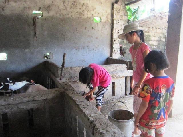 Để có cái ăn, trang trải cuộc sống, các chị em Lan đều giúp nhau trong việc chăm sóc con lợn. Những hôm anh chị đi vắng, hai đứa em út lại quán xuyến công việc trong nhà