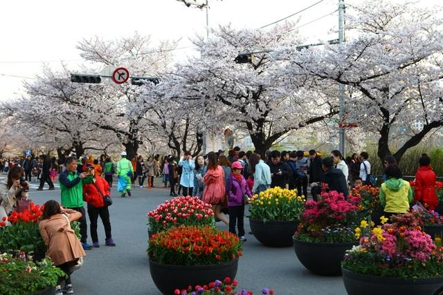 Khách du lịch thích thú lưu lại những khoảnh khắc tuyệt đẹp tại lễ hội hoa anh đào công viên Yeouido.