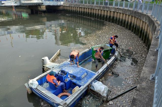 Vớt cá chết trên kênh Nhiêu Lộc - Thị Nghè (ảnh Đình Thảo)