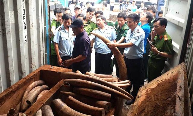 Lô ngà voi trị giá hàng trăm tỷ đồng được lực lượng chức năng phát hiện, thu giữ (Ảnh: Trung Kiên)