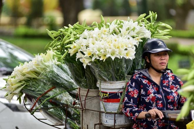 Tháng tư về, hoa loa kèn tinh khôi xuống phố Hà Nội - 5