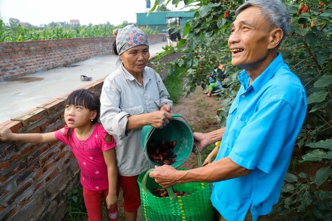 Nông dân ngoại thành Hà Nội mỏi tay thu hoạch dâu chín - 13