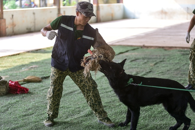 Sau hàng loạt vụ chó tấn công kinh hoàng: Những kinh nghiệm sống còn để thoát hiểm - 18