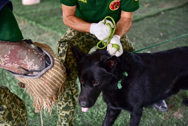 Sau hàng loạt vụ chó tấn công kinh hoàng: Những kinh nghiệm sống còn để thoát hiểm - 12