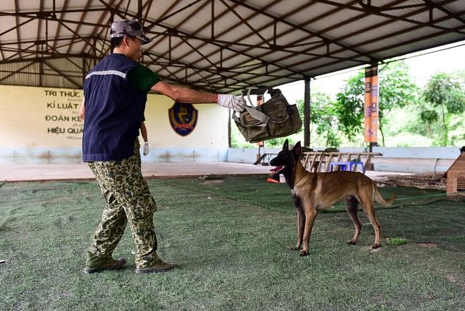 Sau hàng loạt vụ chó tấn công kinh hoàng: Những kinh nghiệm sống còn để thoát hiểm - 6