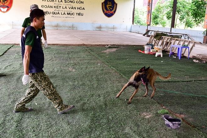 Sau hàng loạt vụ chó tấn công kinh hoàng: Những kinh nghiệm sống còn để thoát hiểm - 4