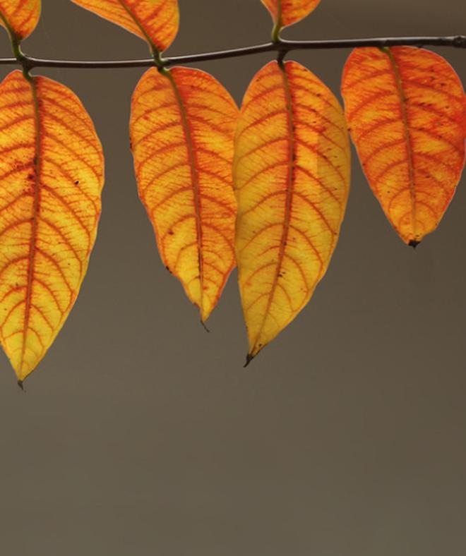 Mùa thu Hà Nội và những đặc sản gây thương nhớ - 7