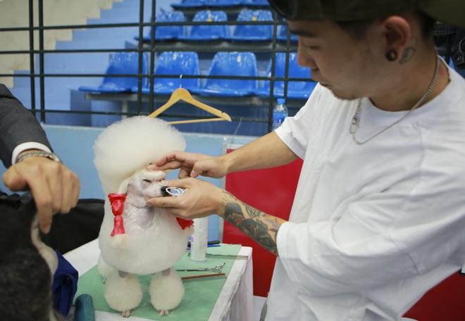 Hơn 200 chú chó quý tộc giá nghìn USD thi tài giành danh hiệu tại Hà Nội - 9