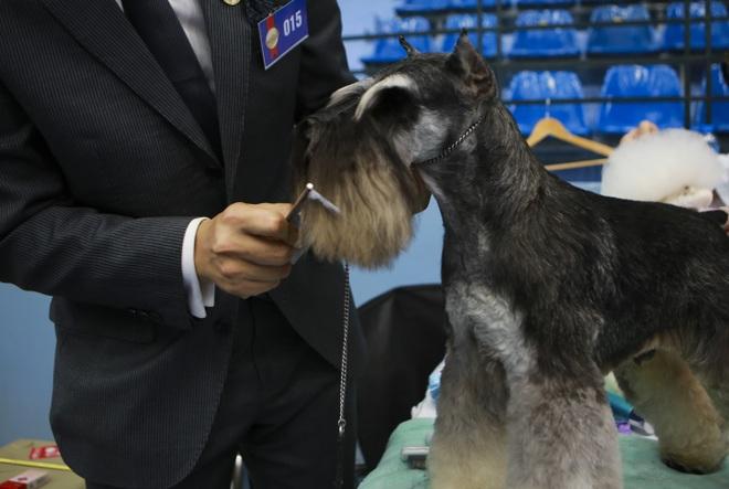 Hơn 200 chú chó quý tộc giá nghìn USD thi tài giành danh hiệu tại Hà Nội - 11