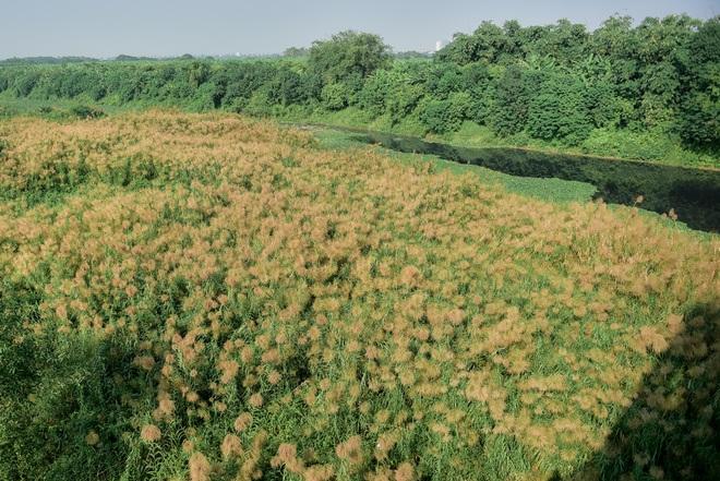 Lạc vào cánh đồng cỏ lau đẹp như xứ sở thần tiên dưới chân cầu Long Biên - 18