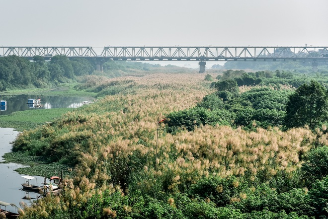 Lạc vào cánh đồng cỏ lau đẹp như xứ sở thần tiên dưới chân cầu Long Biên - 11